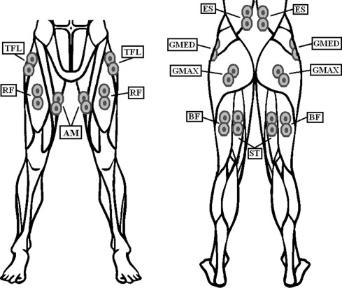 489x412 Neuromuscular Response Of Hip Spanning And Low Back Muscles