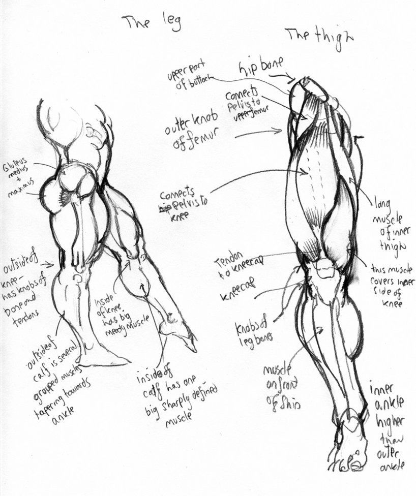 This is a picture of Dynamite Muscle Leg Drawing
