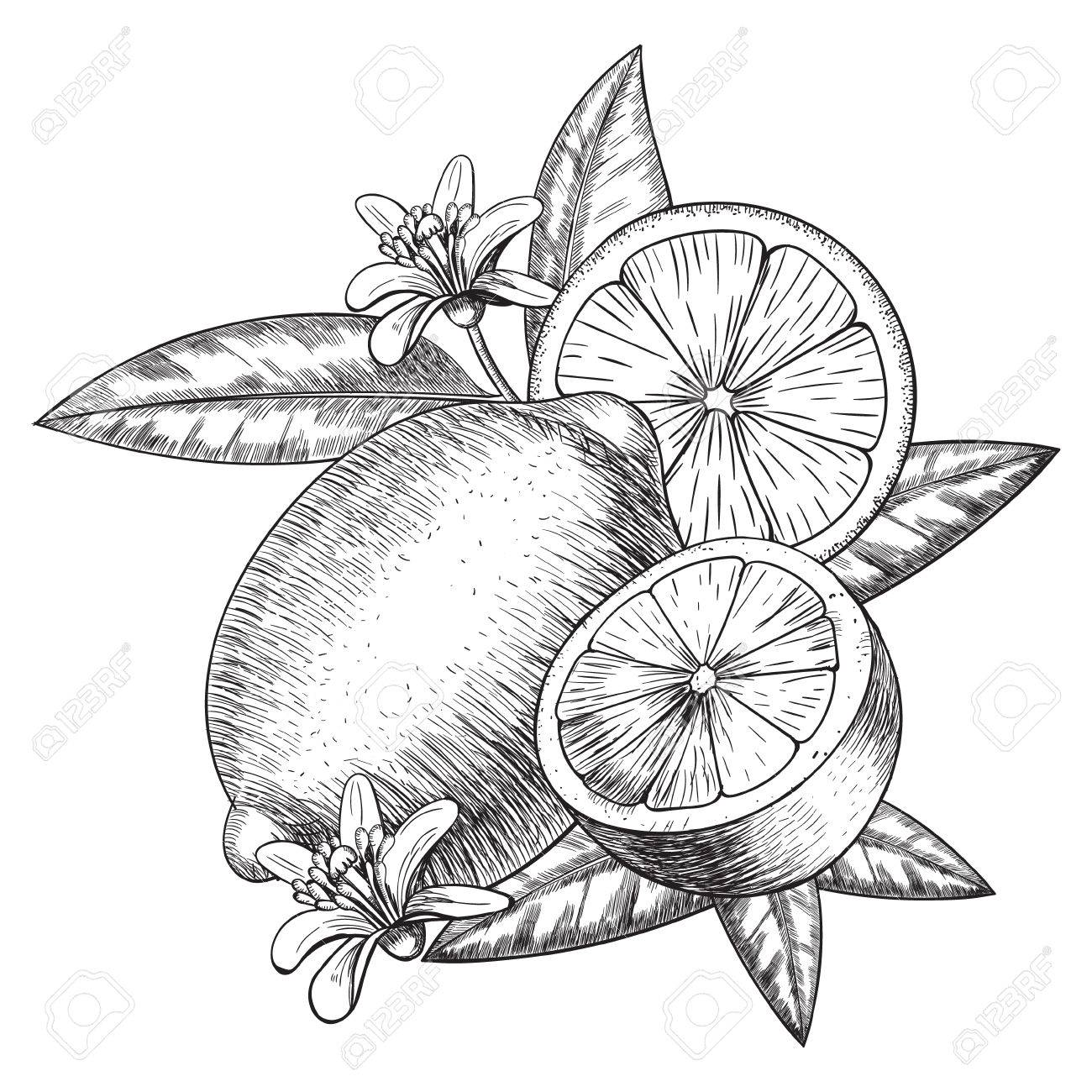 1300x1300 Lime Or Lemon Set. Whole Lemon, Sliced Pieces Half, Leave Sketch