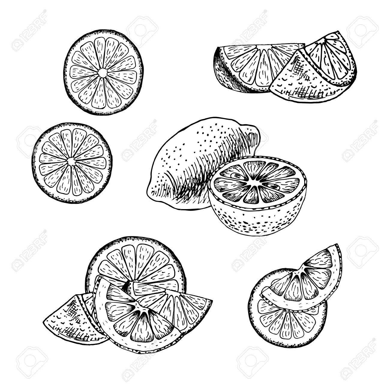 1300x1300 Hand Drawn Set Of Lemon. Retro Isolated Sketches. Vintage