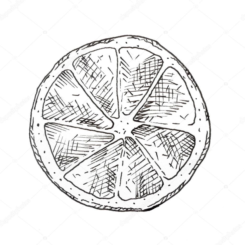 1024x1024 Hand Drawn Lemon Slice Ink Sketch Stock Photo Awispa
