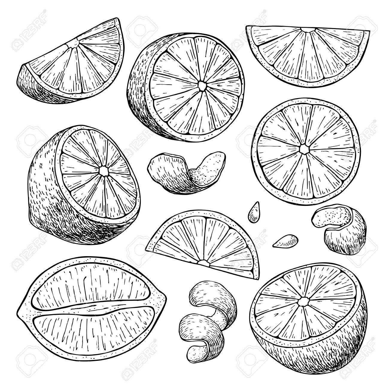 1300x1300 Vector Hand Drawn Lime Or Lemon Set. Whole Lemon, Sliced Pieces