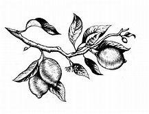 217x167 Lemon Branch Body Ink Lemon, Tattoo And Tatting