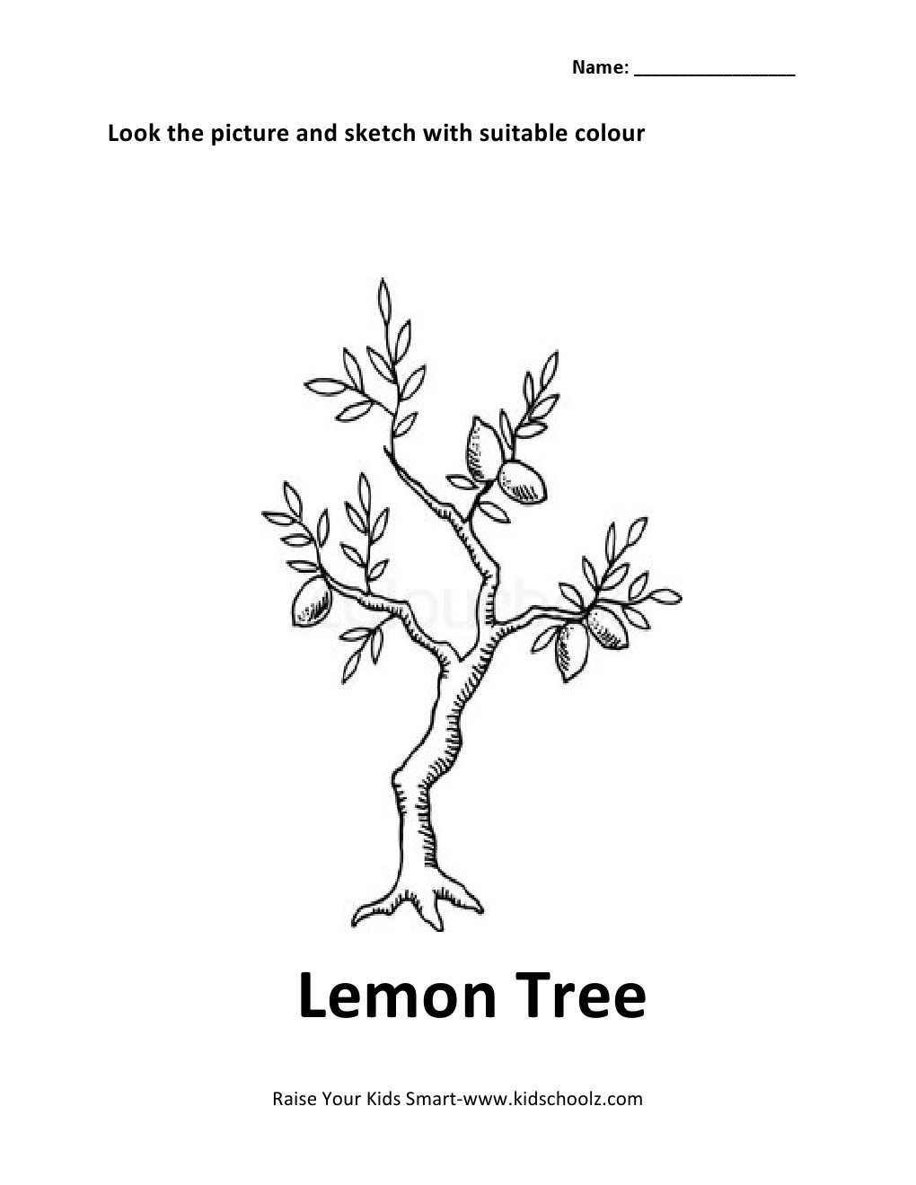 worksheet Lemon Tree Worksheet lemon tree drawing at getdrawings com free for personal use 1020x1320 colouring worksheet