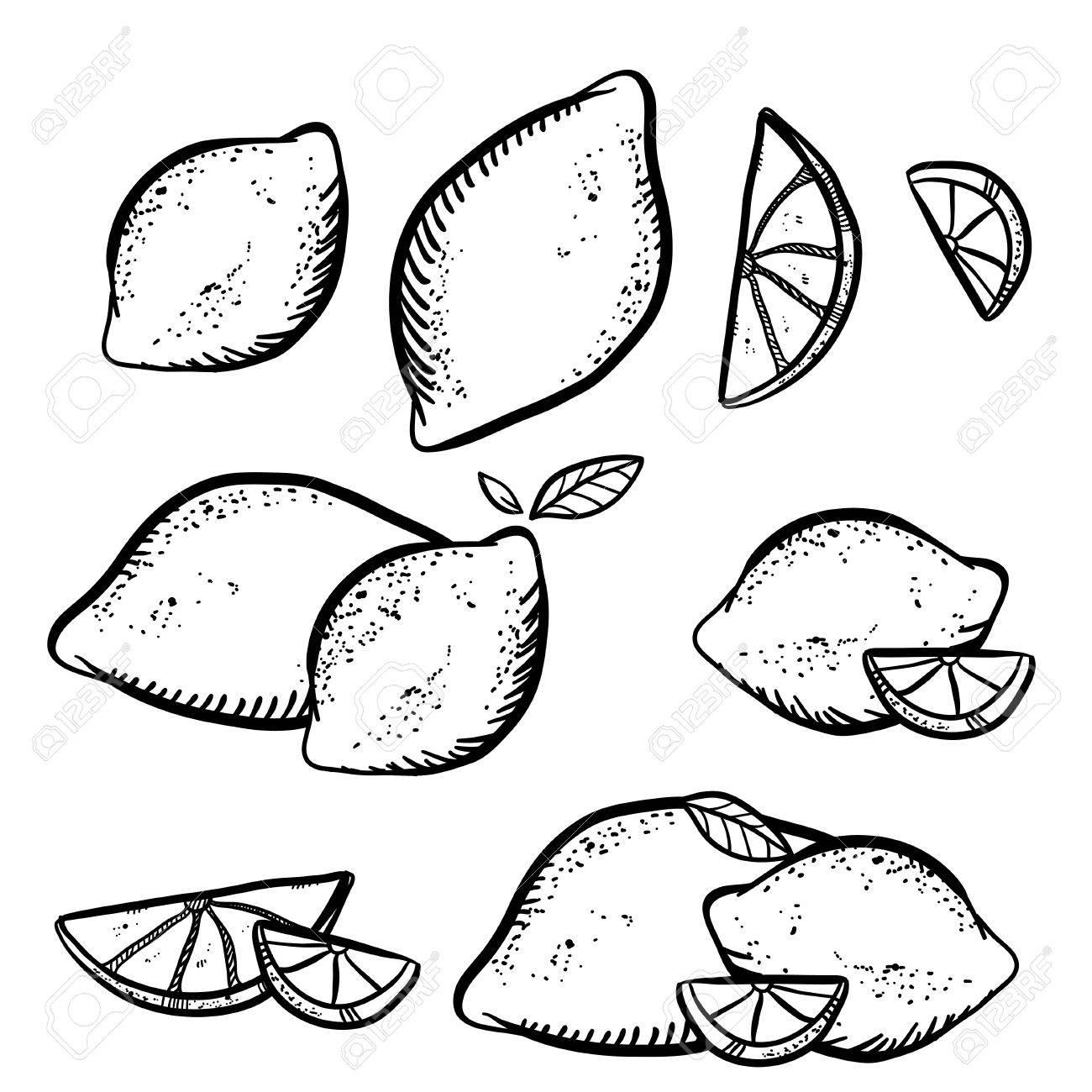 1300x1300 Vector Illustration With Sketch Lemons. Set Of Doodle Lemons