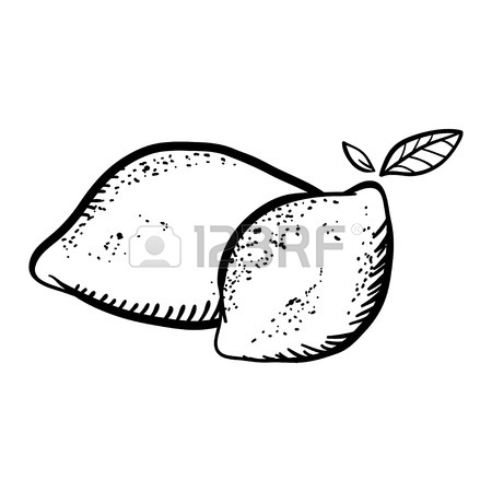 450x450 Vector Illustration With Sketch Twolemons And Lemon Wedge. Set