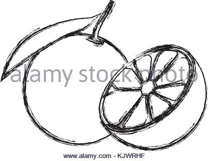 412x320 Draw Lemon Citrus Fruit Fresh Half Stock Vector Art Amp Illustration