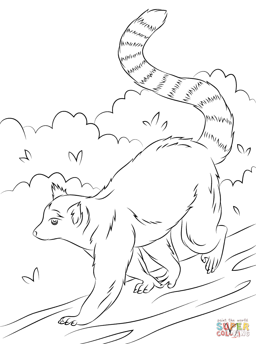 895x1200 Ring Tailed Lemur Drawing Cute Ring Tailed Lemur Coloring Page