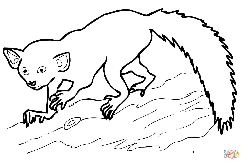 1500x1000 Aye Aye Madagascar Lemur Coloring Page Free Printable Coloring Pages