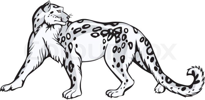 800x392 Snow Leopard Design Stock Vector Colourbox