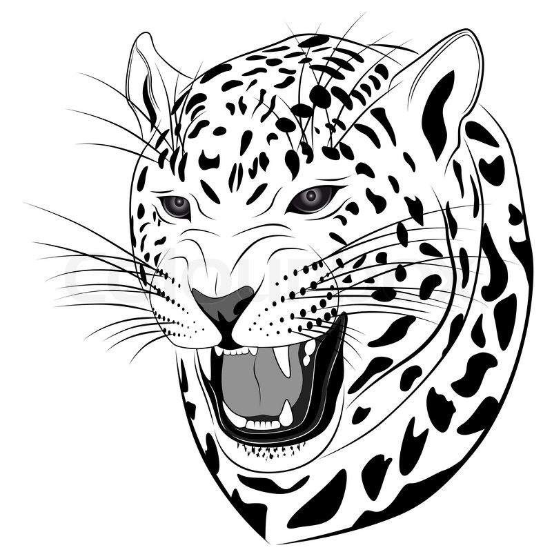 800x800 Vector Leopard Executed In The Form Of A Tribal Tattoo Stock