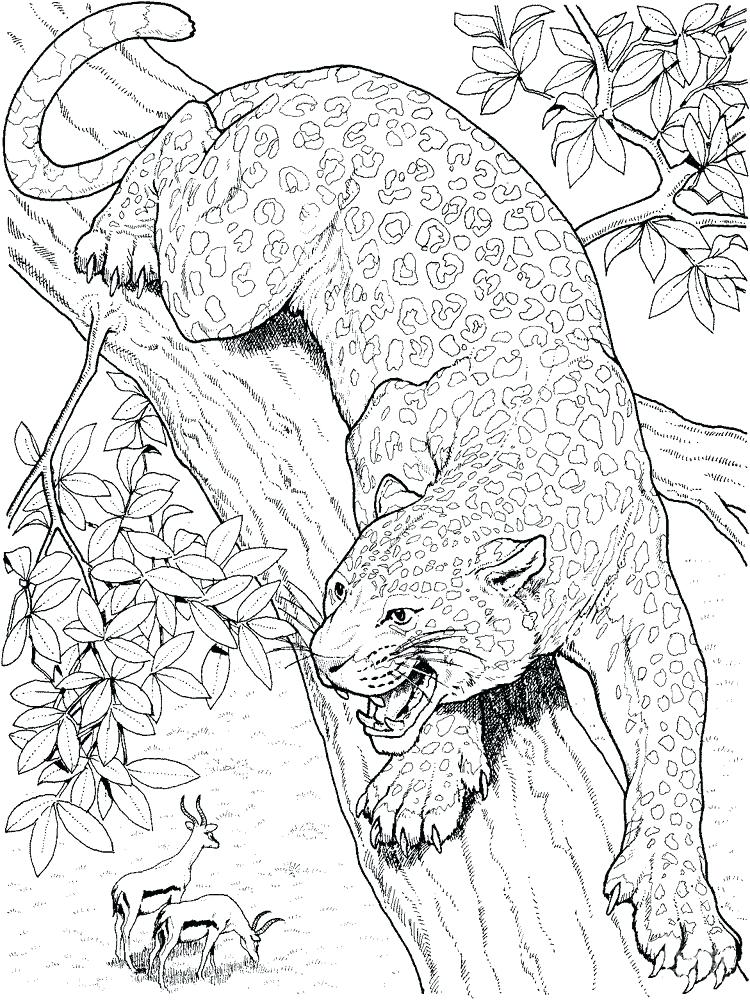750x1000 Leopard Coloring Pages Leopard Animal Coloring Pages Leopard