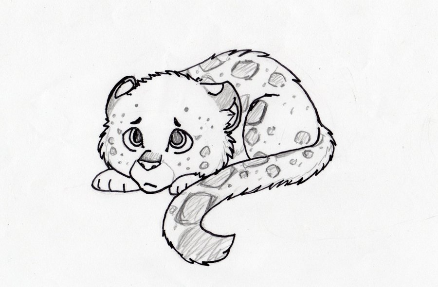 900x591 Snow Leopard Cub Sketch By Adrena Lynne