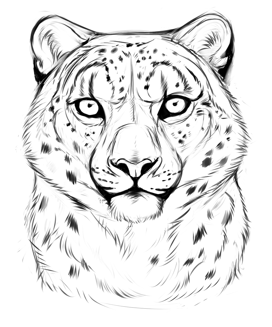 1088x1308 Leopard Face Drawing Easy Snow Leopard Sketchthemysticwolf