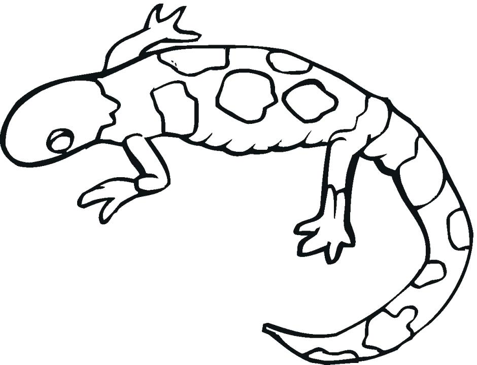 Leopard Gecko Drawing at GetDrawings.com | Free for personal use ...