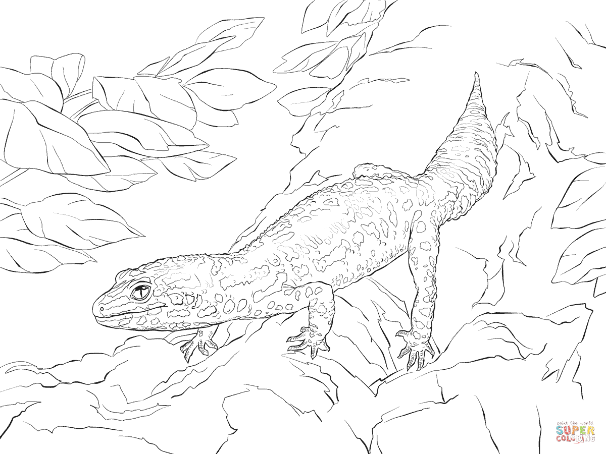Leopard Gecko Drawing At Getdrawings Com Free For Personal Use