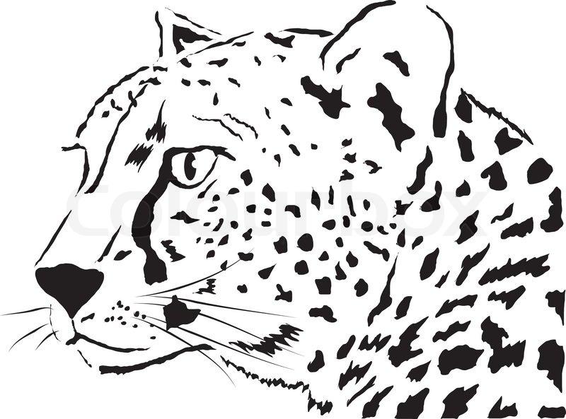 Leopard Head Drawing