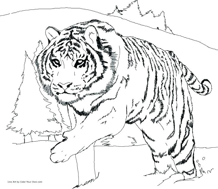736x639 Leopard Coloring Pages Leopard Sneaking Coloring Pages Baby Snow
