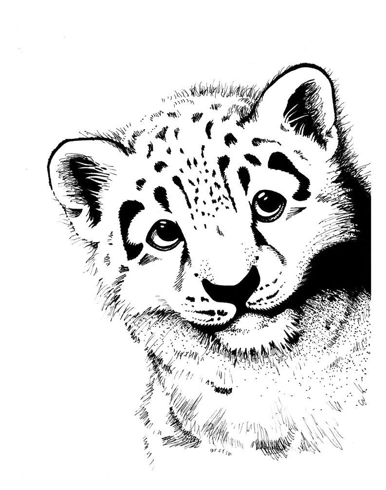 793x1006 Leopard Cub By Spohniscool