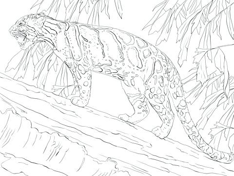 480x360 Leopard Coloring Pages Leopard Gecko Coloring Pages