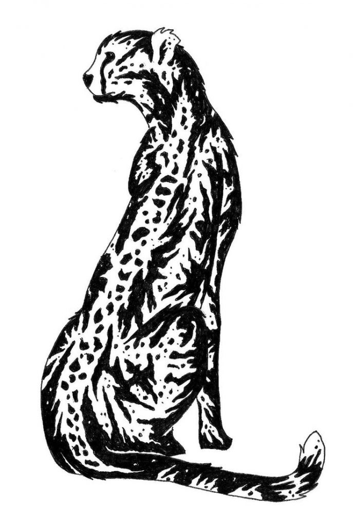 687x1016 Bedroom Coloring How To Draw Leopard Print Step By Plus Cheetah