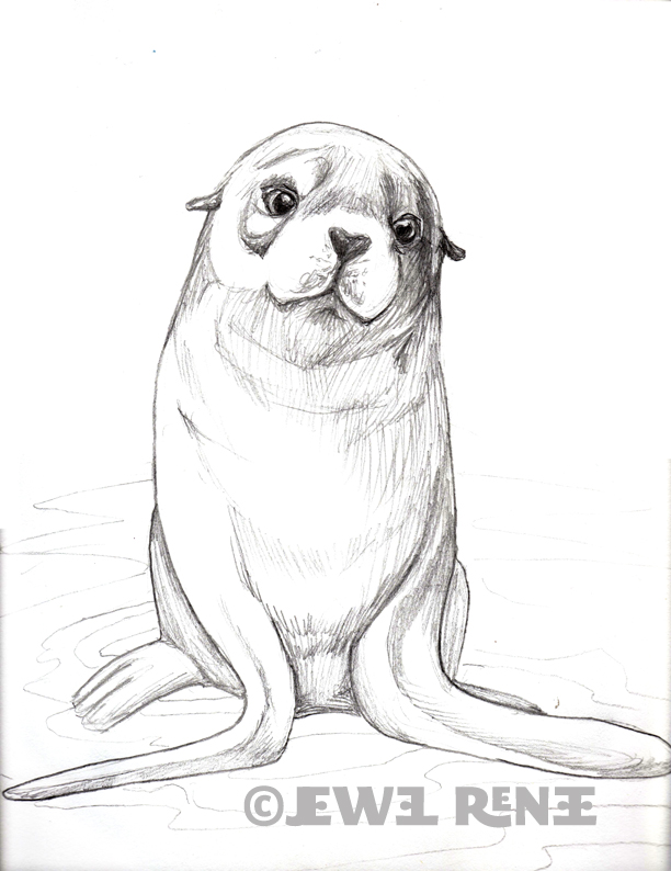 612x794 Jewel Renee Illustration Fur Seal Pup Pencil Drawing Zentangles