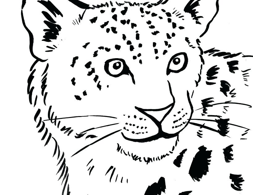 819x630 Leopard Coloring Pages Leopard Seal Coloring Pages