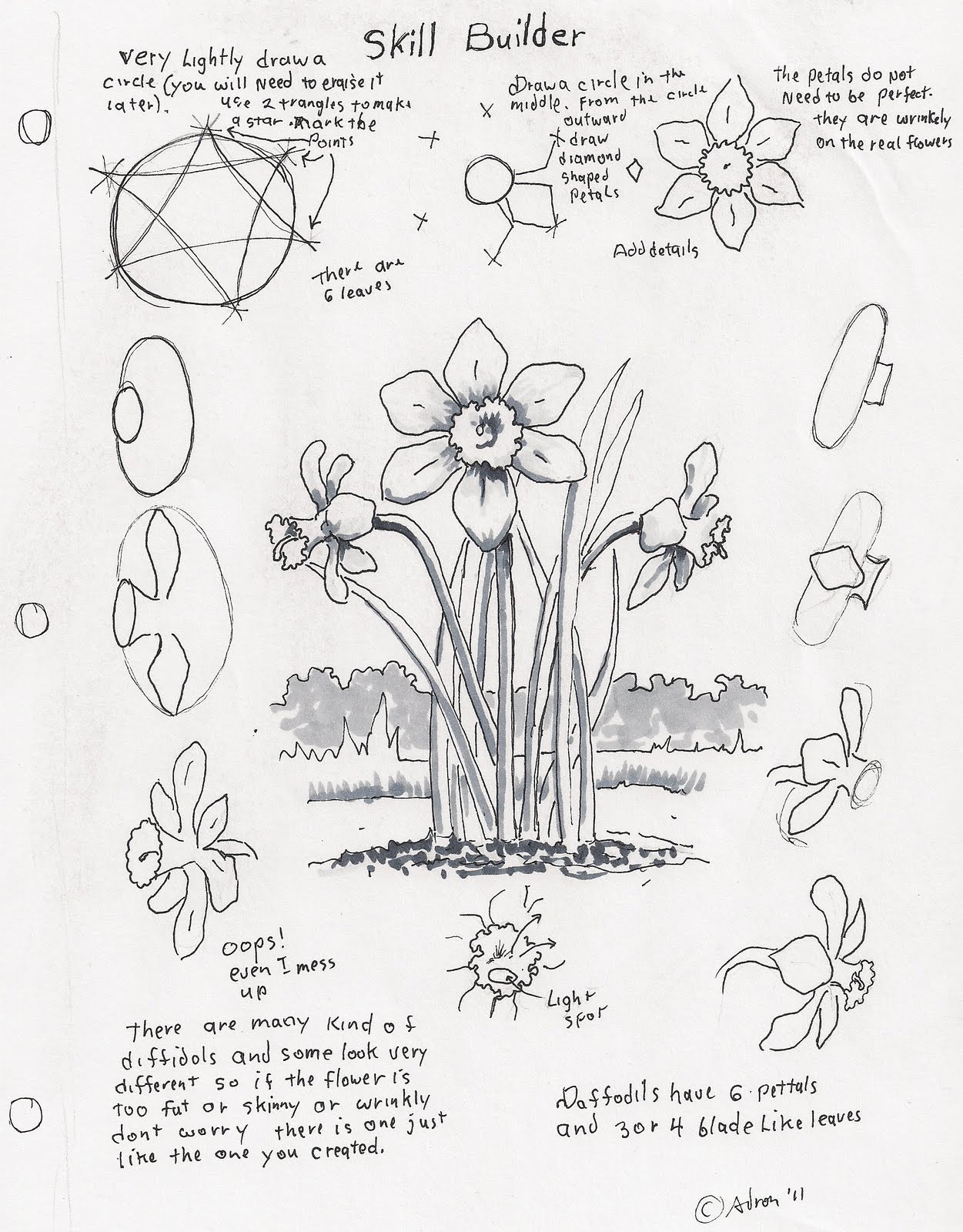 1251x1600 Adron's Art Lesson Plans How To Draw A Daffodil, A Skill Builder