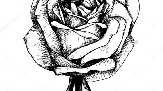 570x320 How To Draw A Perfect Rose How To Draw An Eagle Head Lethalchris