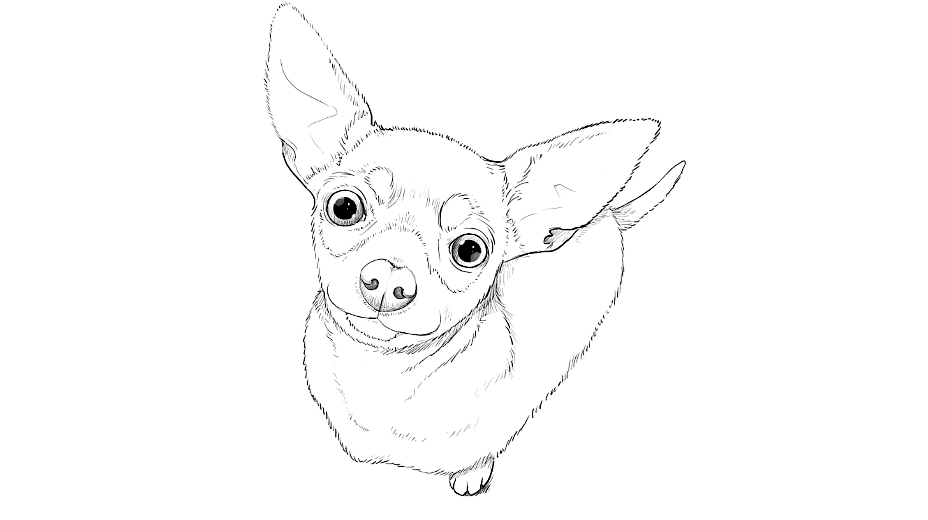 3010x1688 How To Draw Toy Terrier