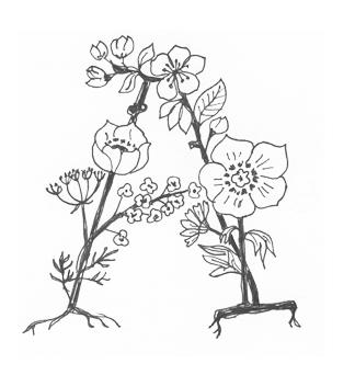 324x342 Botanical Alphabet