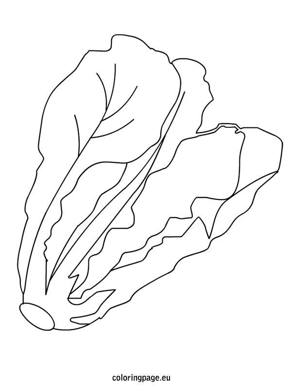 595x804 Lettuce Coloring Page