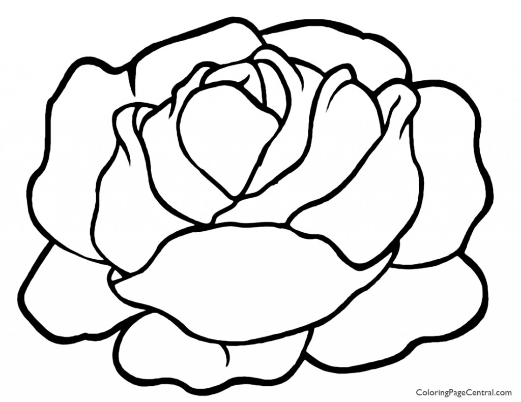 1024x791 Lettuce 01 Coloring Page Coloring Page Central