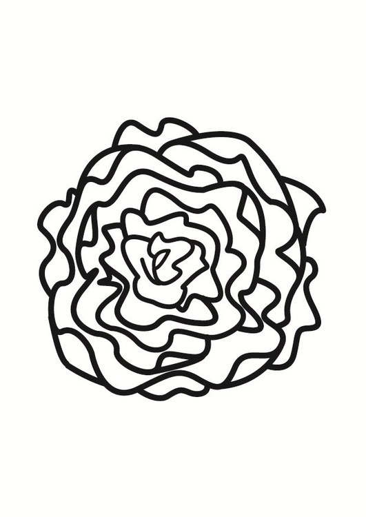 531x750 Coloring Page Lettuce