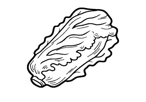 lettuce leaf drawing at getdrawings com free for personal use