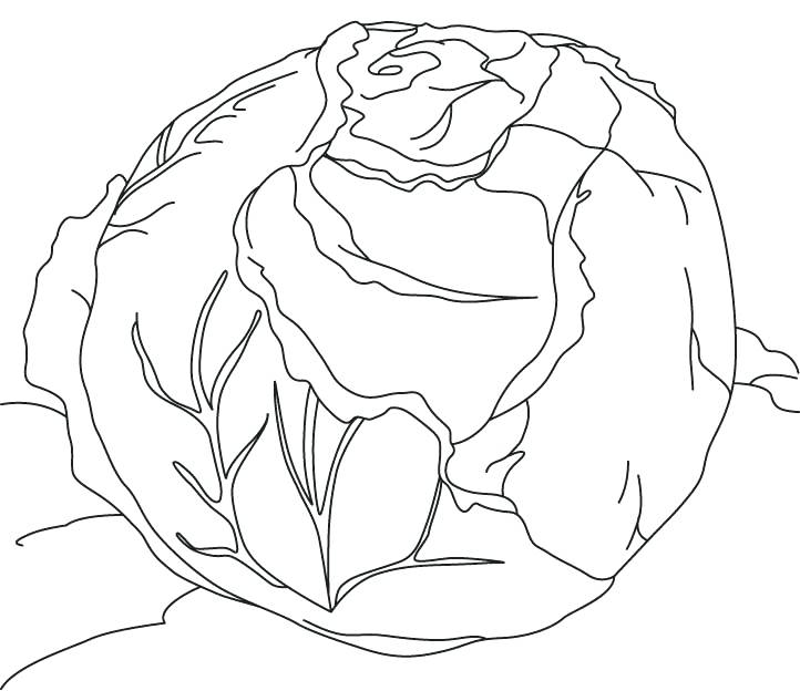 722x624 Lettuce Coloring Page Green Cabbage Coloring Page Lettuce Leaf