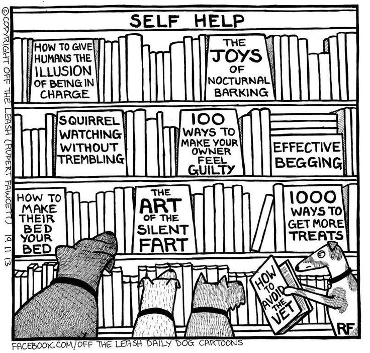 736x701 Library Books Drawing Doggie Libraries, Funny