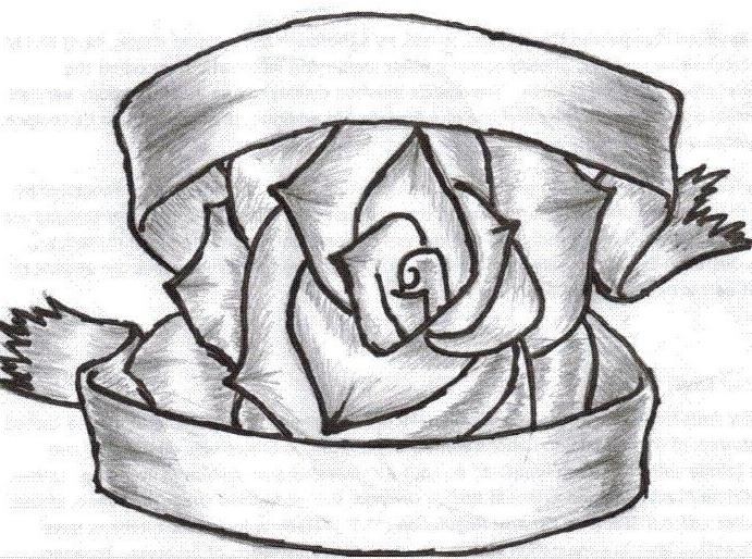 691x514 Rose With Ribbons Drawings