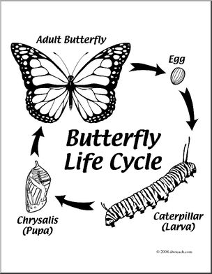 304x392 Clip Art Butterfly Life Cycle (Coloring Page) I