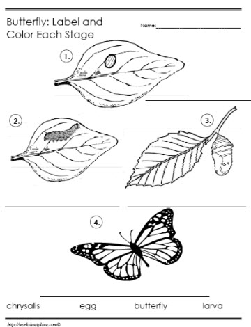 360x470 Butterfly Life Cycle