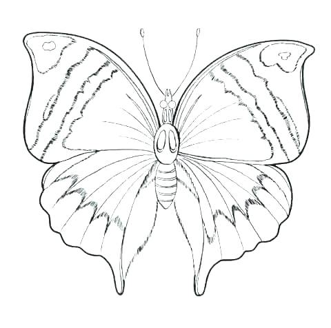 480x476 Butterfly Printable Coloring Pages Butterfly Butterfly Life Cycle