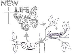 250x187 Kid's Information About New Life In Christ As Butterfly Metaphore