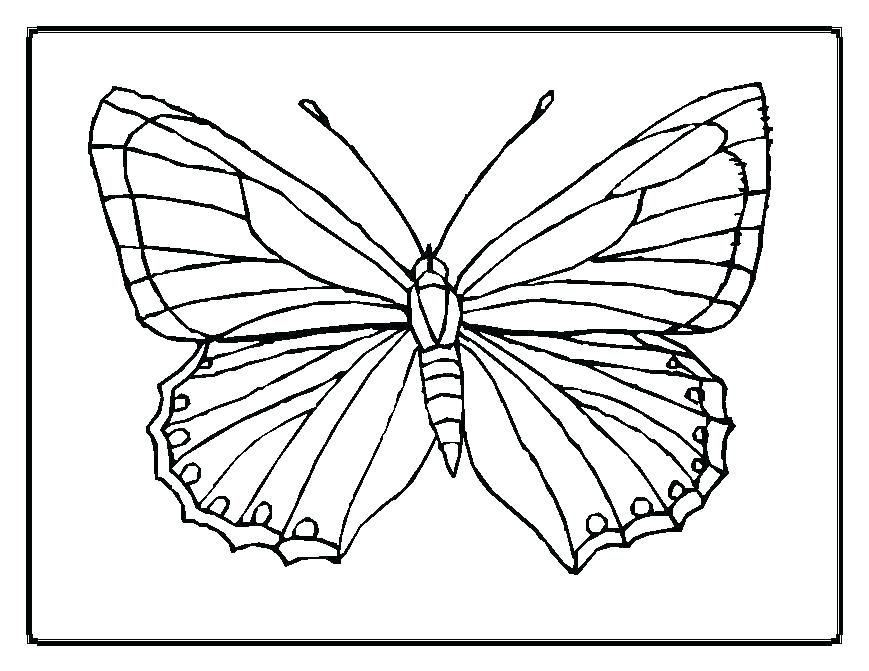 869x671 Monarch Butterfly Life Cycle Coloring Page Butterfly Color Pages