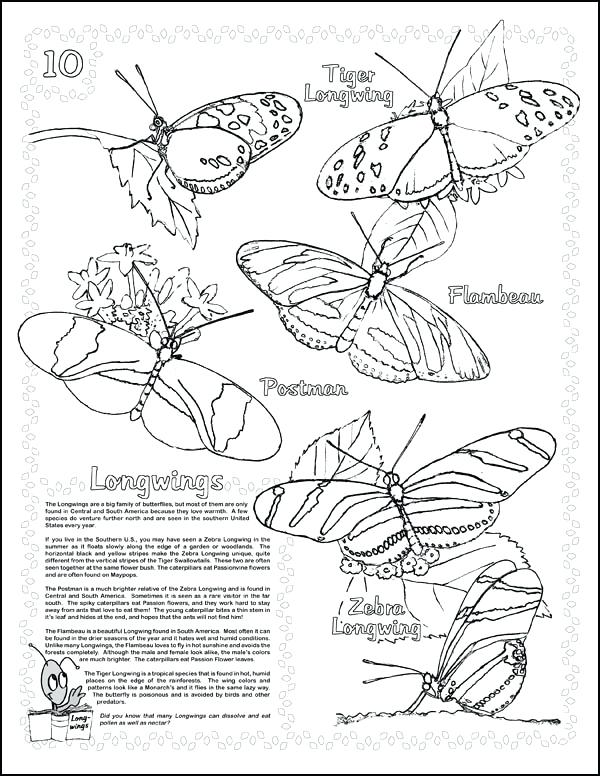 600x776 Monarch Butterfly Life Cycle Coloring Page Live Rearing Kit
