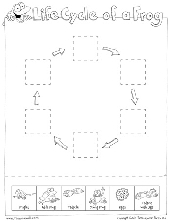 350x453 Life Cycle Of A Frog Worksheets