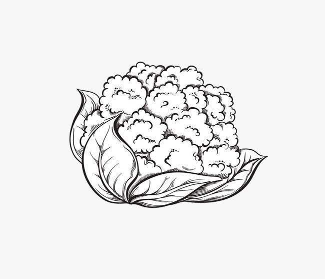 650x557 Pencil Drawing Cauliflower, Cauliflower, Vegetables, Black