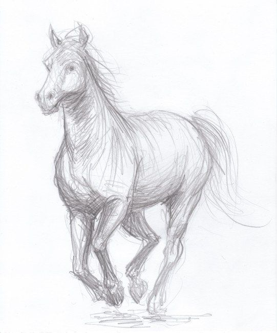 541x650 114 Best Horses Images On Drawings Of Horses, Horse