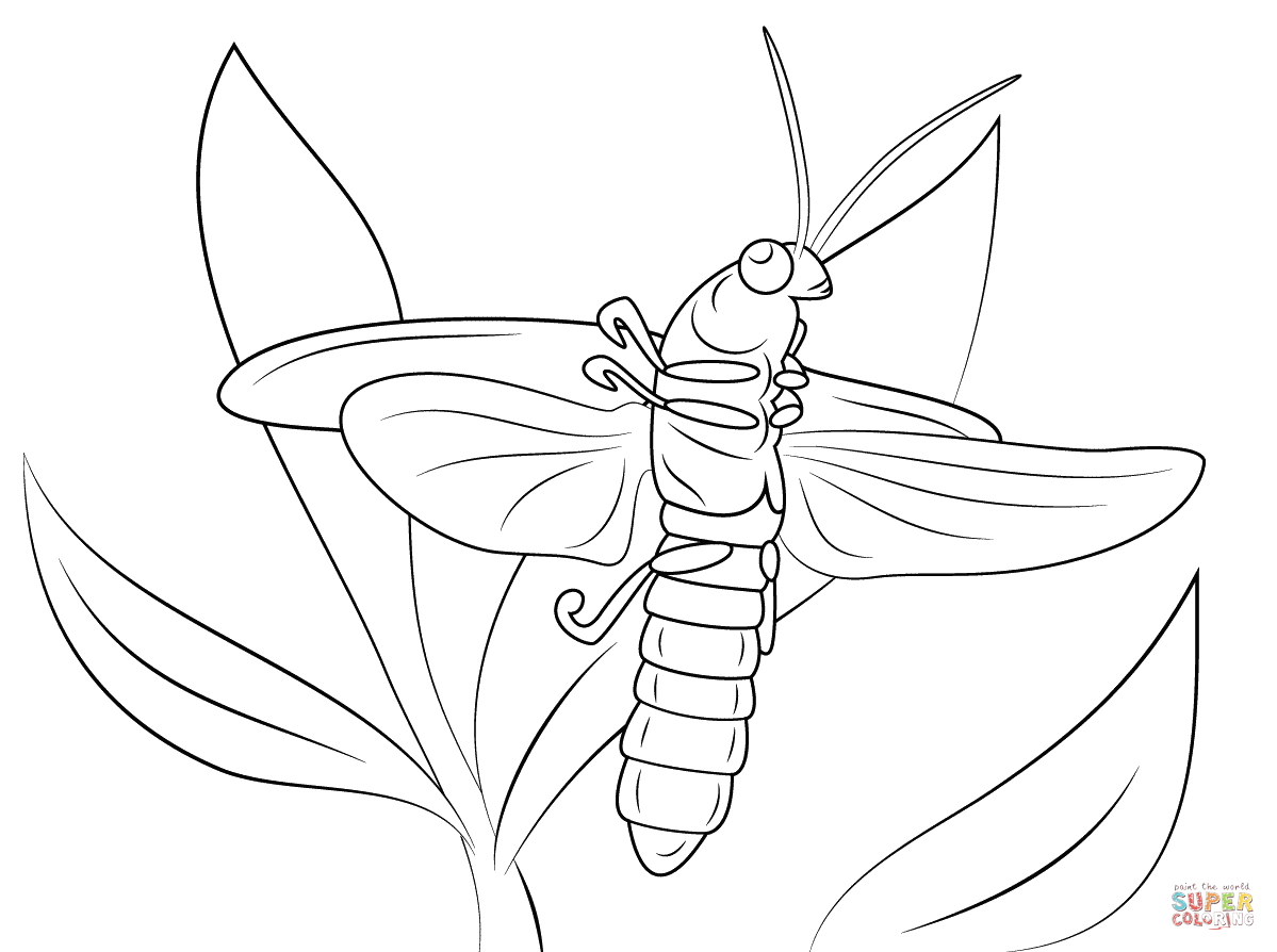 1199x894 Lightning Bug Coloring Page Free Printable Coloring Pages