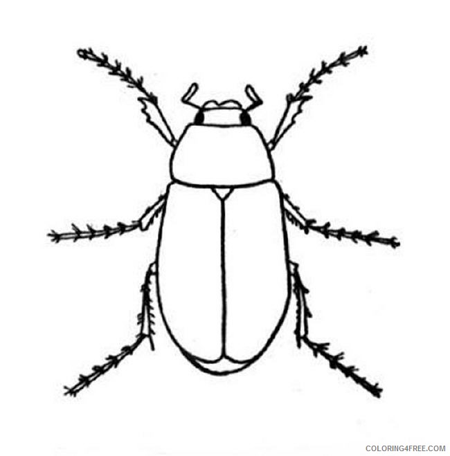 650x659 Bug Coloring Pages Stag Beetle On A Tree Coloring4free