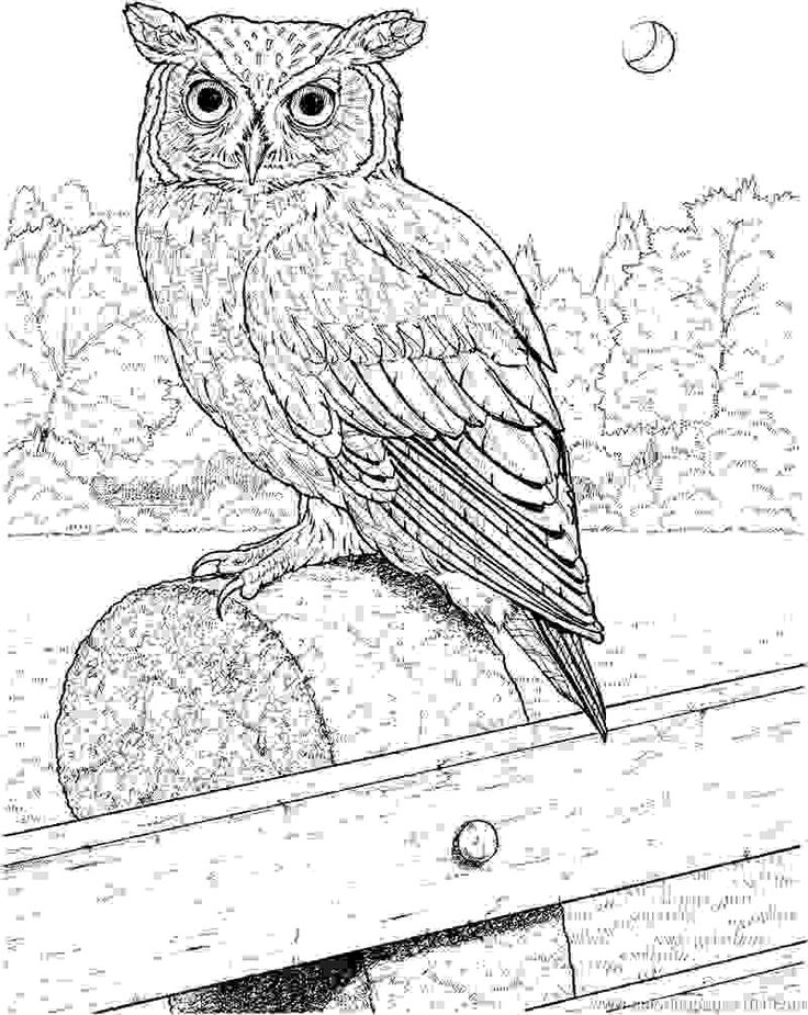 736x925 75 Best Owl Drawing Images On Cutest Animals, Exotic